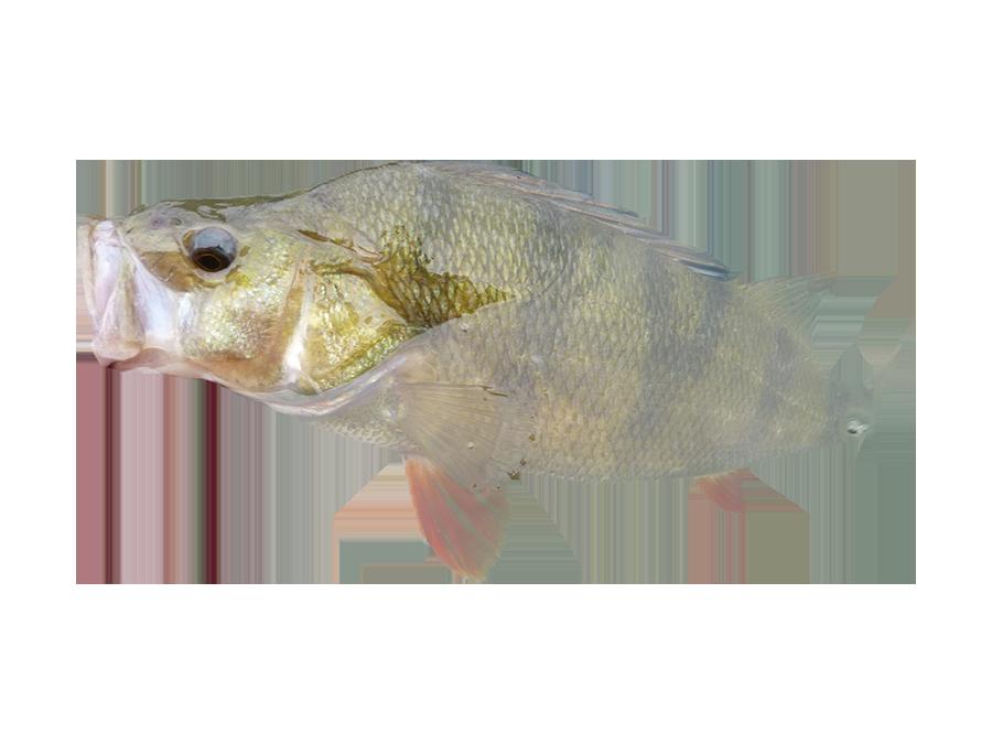 Pêche en bord de marne