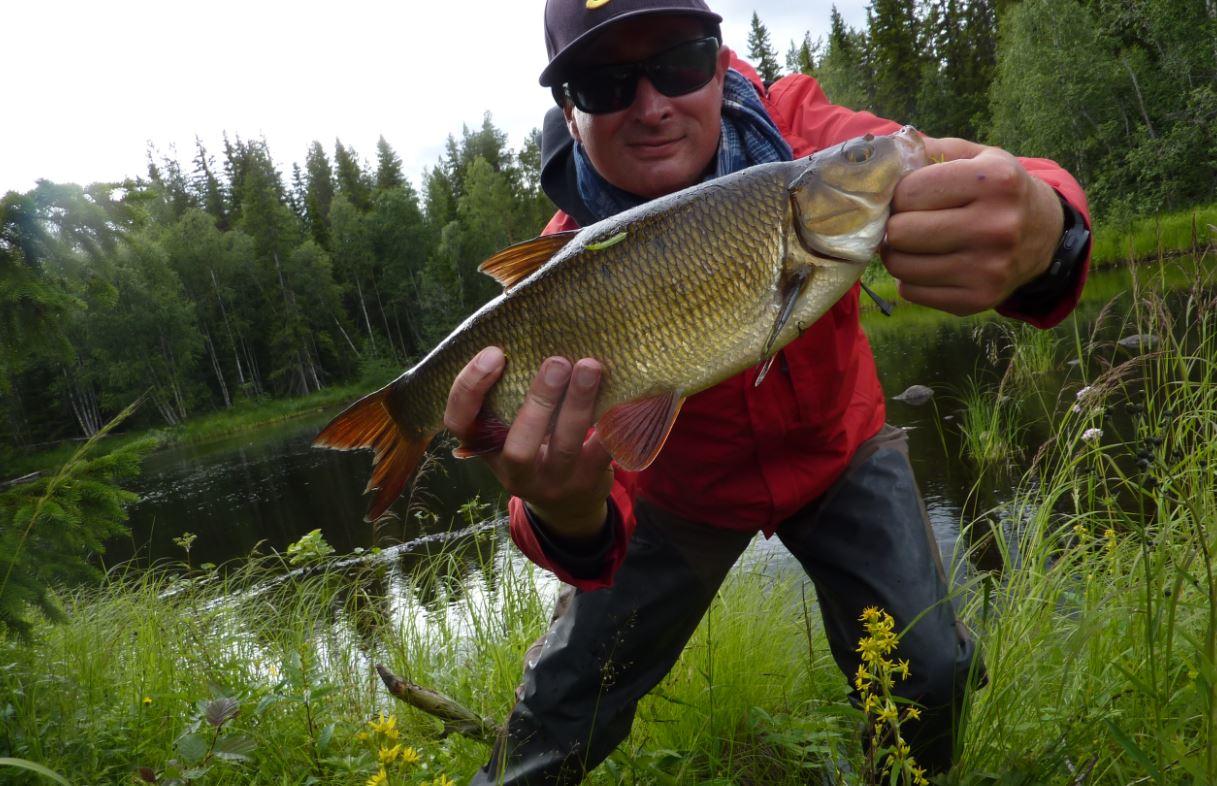 Ide mélanote - Laponie 2015