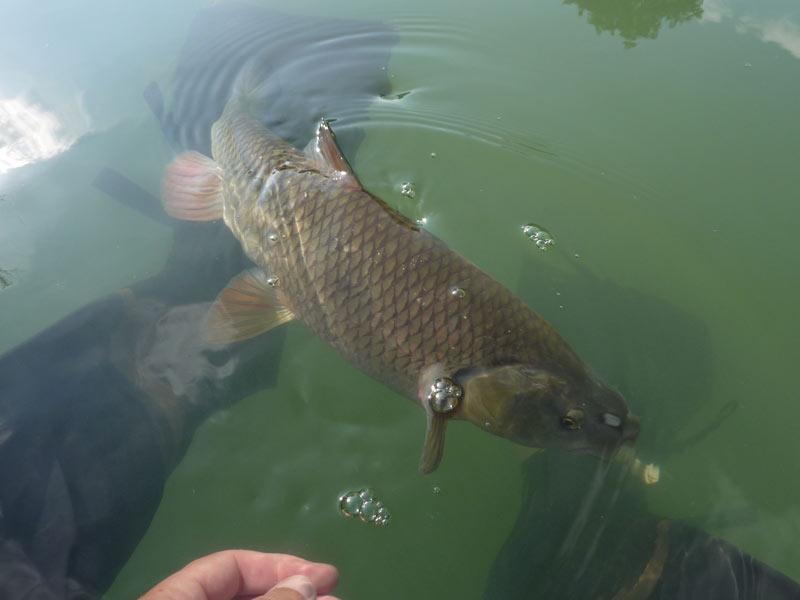 Sortie pêche float tube