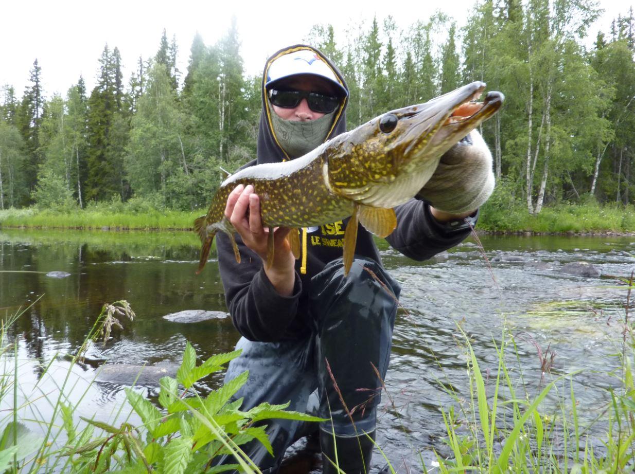 Brochet en wading - Laponie 2016