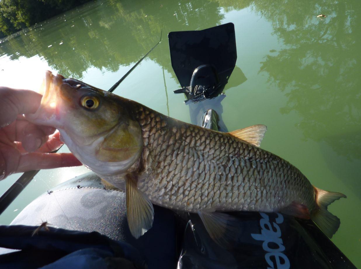 Sortie pêche chevaines 1
