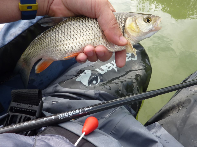 Sortie pêche chevaines 4