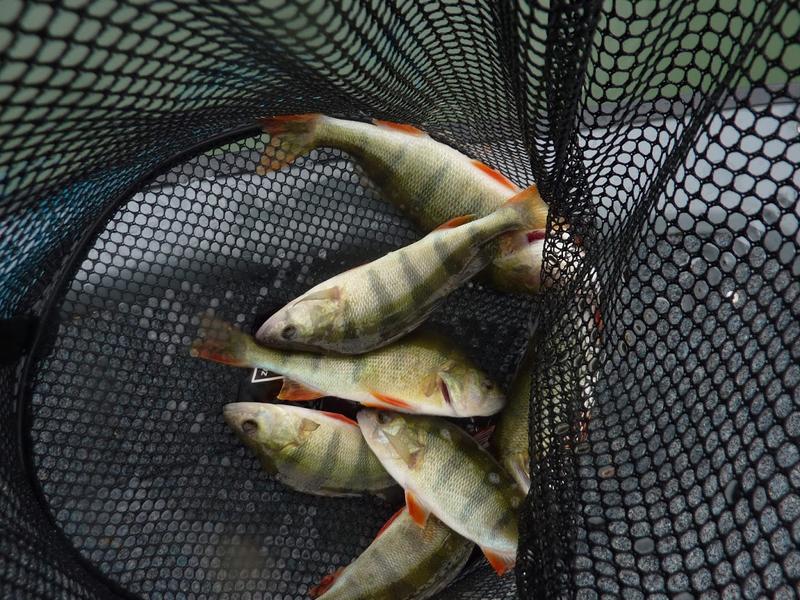 Sortie pêche float tube 3